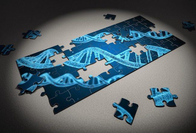 L'importance de faire un test ADN